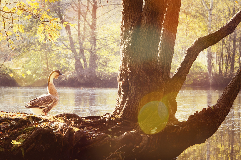 Aoc Terra Portal : Naturpark terra vita home